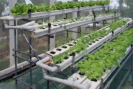 hydroponics1
